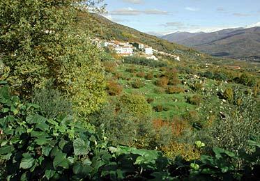 El Rebollar, en la ladera Oeste del Valle del Jerte