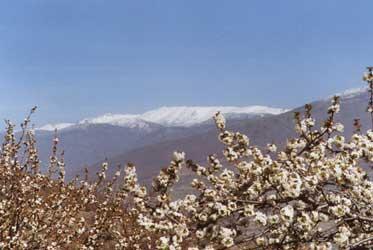 El Valle durante la floración